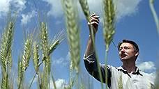 Минсельхоз углубился в зерно