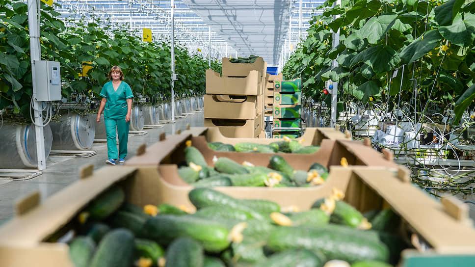 Бюджет Мордовии утеплился / Правительство республики продало крупнейшее тепличное хозяйство