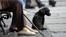 На Нижневолжской набережной запретили выгуливать собак