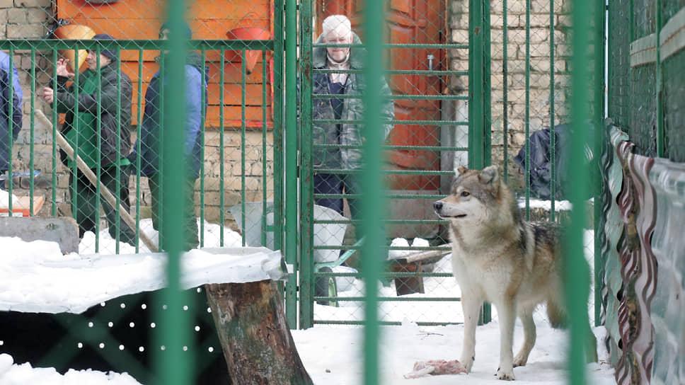 """""""Мишутка"""" был единственным в городе зоопарком, принимавшим найденных и пострадавших животных"""