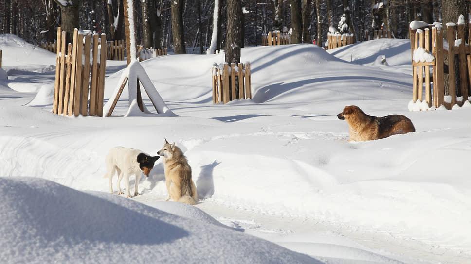 Иногда компанию охранникам составляют бродячие собаки, считающие себя настоящими хозяевами