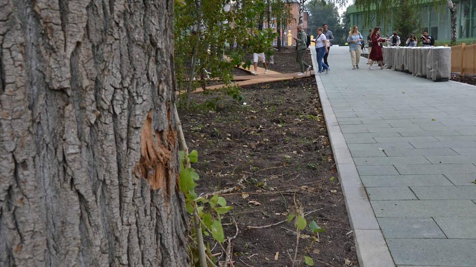 Повреждения на деревьях от строительной техники видны в парке там и тут