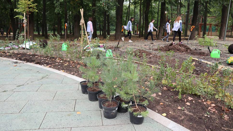 Волонтеры проводят масштабную высадку новой растительности
