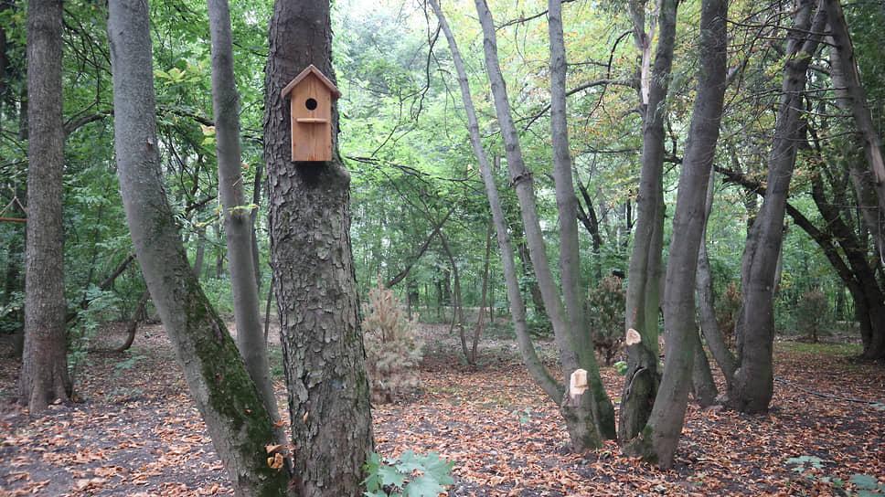 Взамен поврежденных и погибших деревьев по оставшимся развешаны скворечники