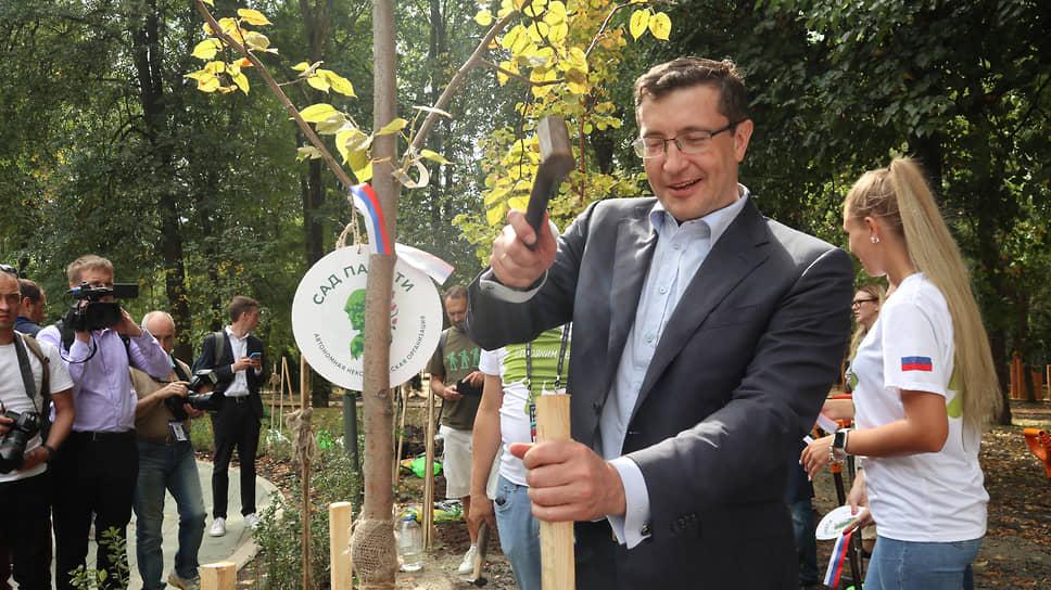 Теперь губернаторское дерево вырастет высоким. Глеб Никитин забивает колышек для поддержки ствола