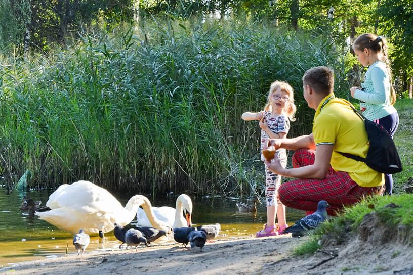 Пока есть минутка между представлениями, можно покормить лебедей
