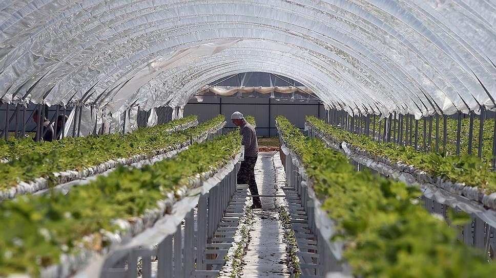 Агробизнес в «цифрах» / Технологии