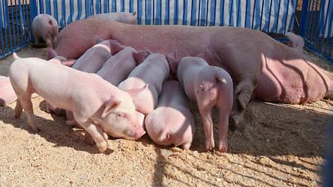 «Кудряшовский» на мясо  / Сибирская аграрная группа приобрела новосибирские активы холдинга «Копитания»