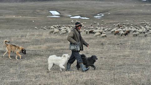 Выборы идут прямо в гору  / Депутатам Эл Курултая предложили пересмотреть избирательную схему в Республике Алтай