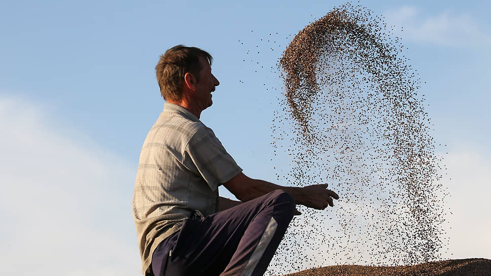 Отсутствие осадков летом не дало крестьянам шансов на хороший урожай