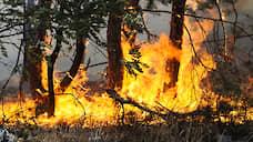 Огонь в Красноярском крае охватил почти 650 тысяч гектаров