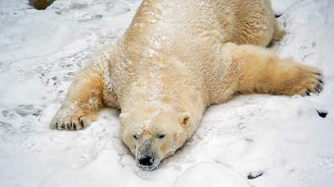 Новосибирский зоопарк приостановил работу из-за коронавируса  / Для безопасности и людей, и животных