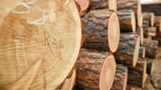 Ущерб от незаконной рубки леса в Иркутской области составил 204 млн рублей