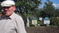 Следователи проведут проверку по факту гибели 20 млн пчел  в Красноярском крае