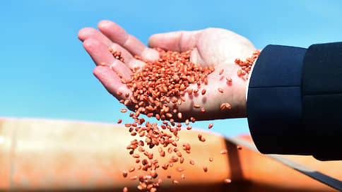 Профицит зерна в Новосибирской области может составить 1 млн тонн  / Валовый сбор в регионе прогнозируется рекордным