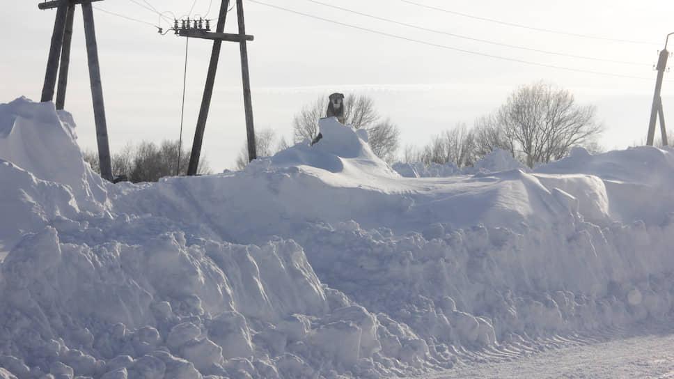 Страдают из-за снегопадов не только люди, но и животные
