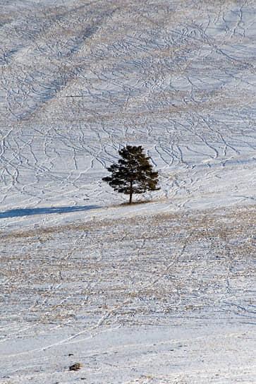 Одинокое дерево стоит вдоль единственной дороги с материка до поселка Хужир