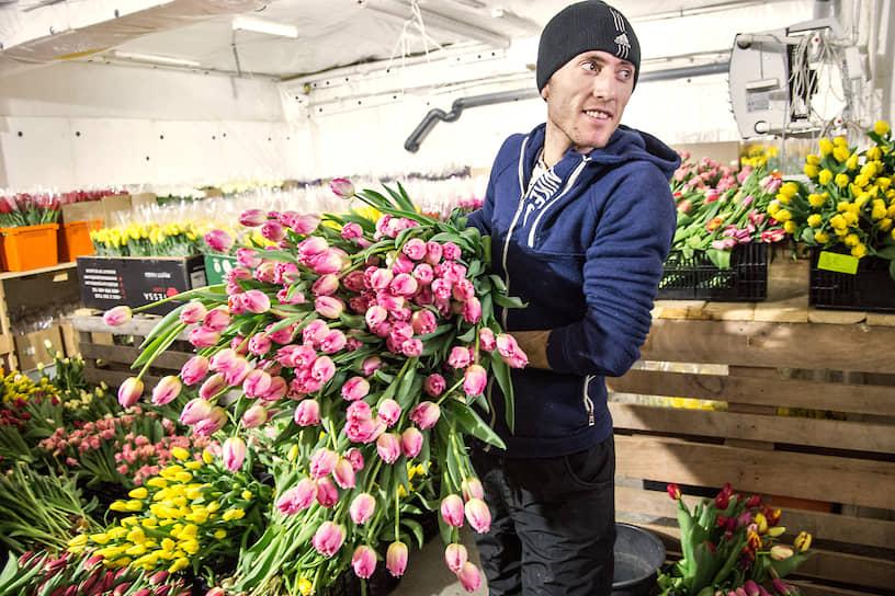 Работник теплицы со срезанными тюльпанами в холодильнике для хранения готовых цветов