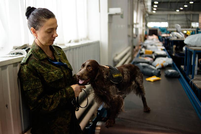 Сотрудница кинологической службы Новосибирской таможни со служебной собакой проверяет почту в месте международного почтового обмена Толмачево