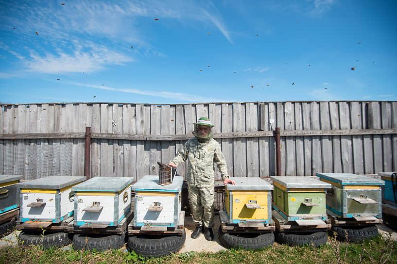 Пчеловод во время работы на пасеке в Каргатском районе Новосибирской области