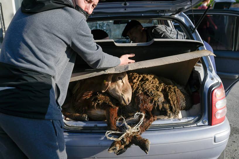 На фото: продажа баранов во время праздника жертвоприношения Курбан-Байрам возле Соборной мечети Новосибирска. Мужчина укладывет купленного барана в багажник автомобиля