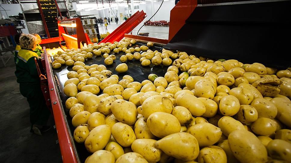 «Агрокультура» в массы / Компания намерена развивать продажу овощных полуфабрикатов
