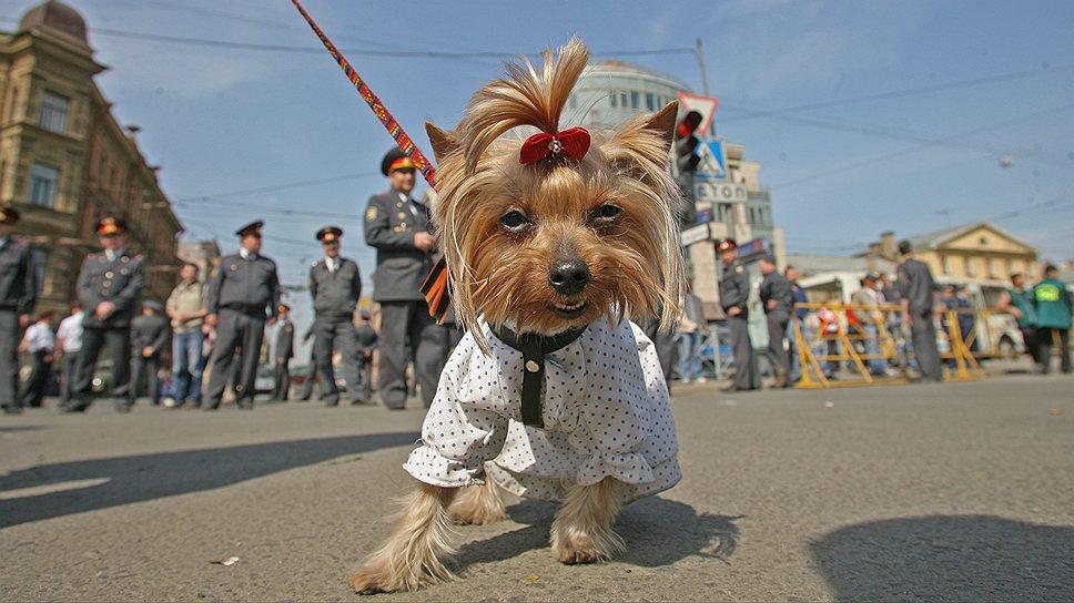 Деньги, собранные в виде налога на домашних животных, предполагается направлять на уборку территории