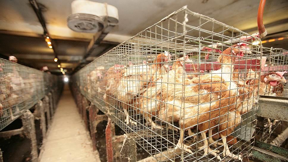 Очистные сооружения в поселке Победа в Ленобласти появятся не раньше 2020 года, и местным жителям еще не менее двух лет придется дышать тяжелым запахом отходов птицефабрики «Ударник»