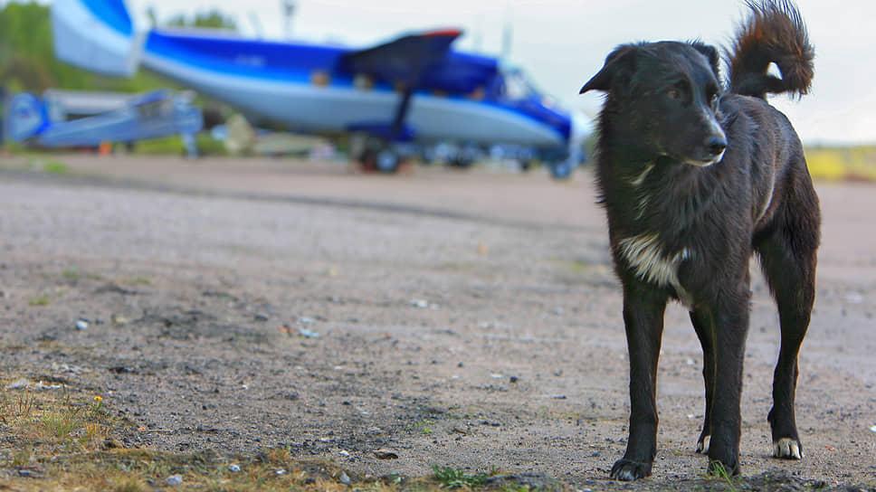 Сиверский открыл счет инвесторам / Еще одного претендента на аэропорт связывают с владельцем компании «Конт»