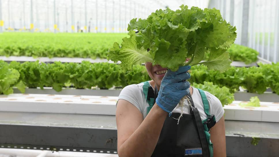 Инвестиции порубят на салат / «Выборжец» утроит объем производства зеленых культур