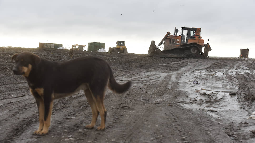 В отходах наведут германский порядок / Зарубежные инвесторы могут заняться переработкой мусора в Ленобласти
