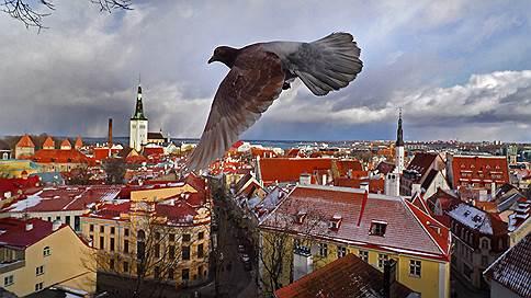 День независимости Эстонии  / День независимости Эстонии