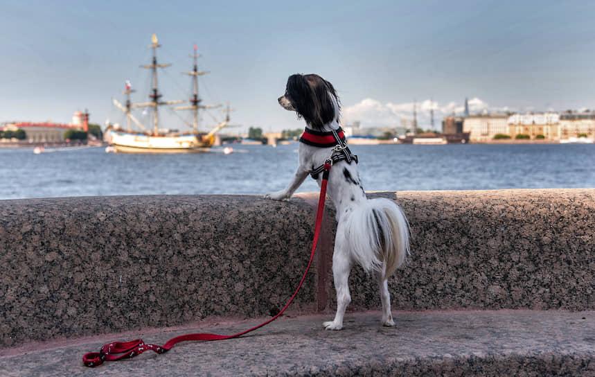 Собака породы китайская хохлатая на набережной во время репетиции парада на День ВМФ