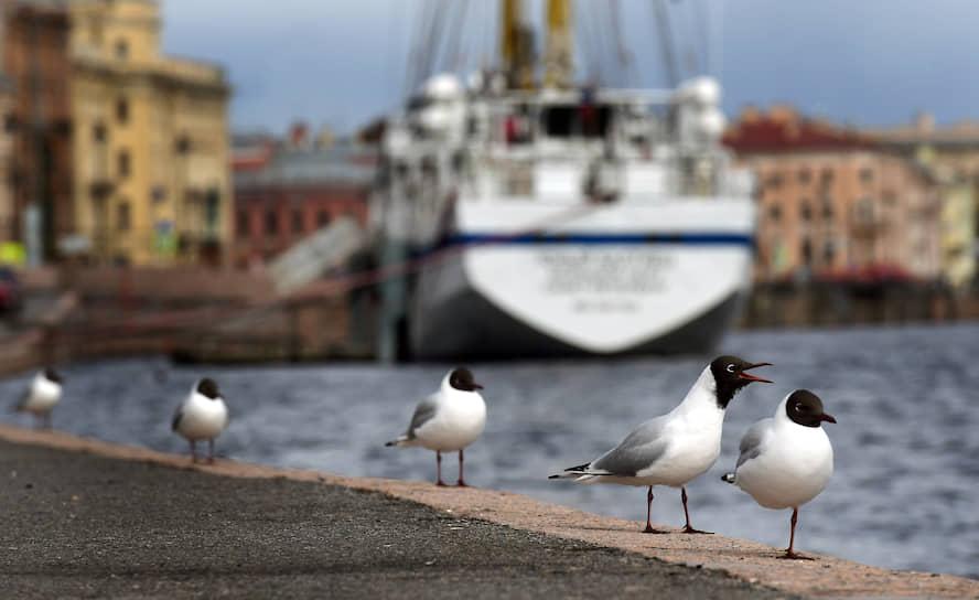 Чайки на пустой набережной Лейтенанта Шмидта