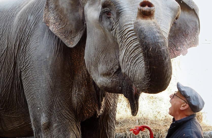Дрессировщик Каррадо Тоньи итальянского цирка Тоньи (Togni) из Турина во время прогулки со слоном во дворе цирка