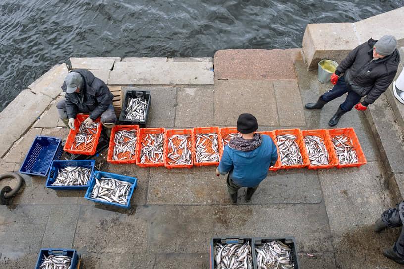 Промысловый лов корюшки в Неве и ее притоках. Рыбаки с уловом на набережной Невы