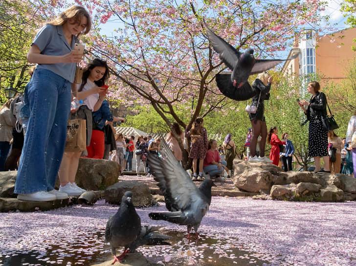 Посетители в Саду Дружбы на Литейном проспекте у цветущего дерева сакуры