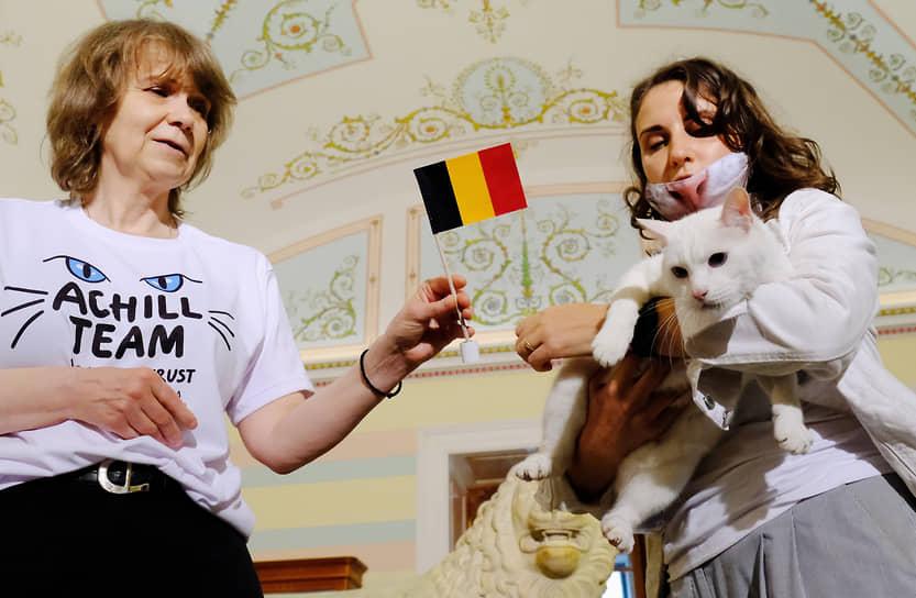Церемония предсказания кота Ахилла из Эрмитажа исхода матча между сборными России и Бельгии. Церемония прошла в Государственном Эрмитаже