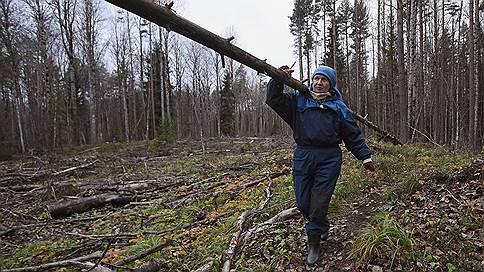 Лесной комплекс ждет интенсива  / деревопереработка