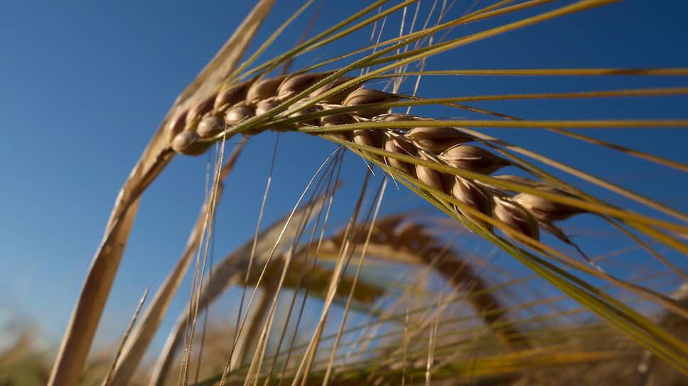 Одна из главных сложностей сельского хозяйства в Ленинградской области заключается в том, что регион является зоной рискованного земледелия. Однако это, наряду с высокой конкуренцией, стимулирует агропроизводителей использовать прогрессивные технологии