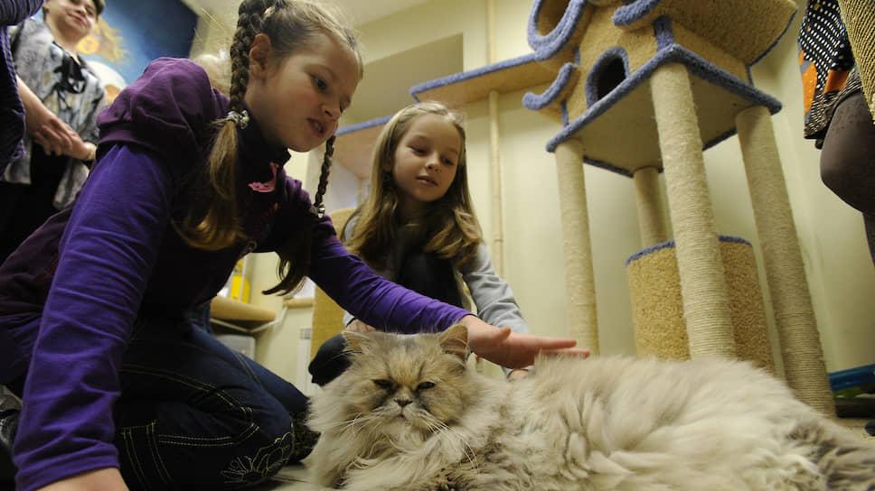 Первенство среди методов обучения ребенка гармоничному взаимодействию с животными, по мнению экспертов, принадлежит положительному воздействию его самых близких взрослых
