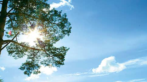 Деревья и бумага  / Стиль Путешествие