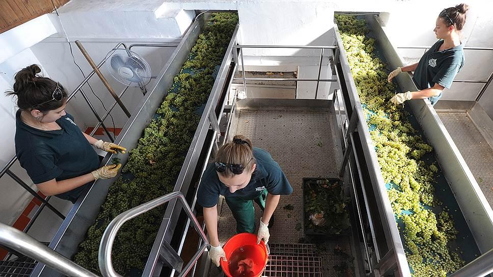 Вино сольют в кластер / Власти Ростовской области хотят объединить местных производителей