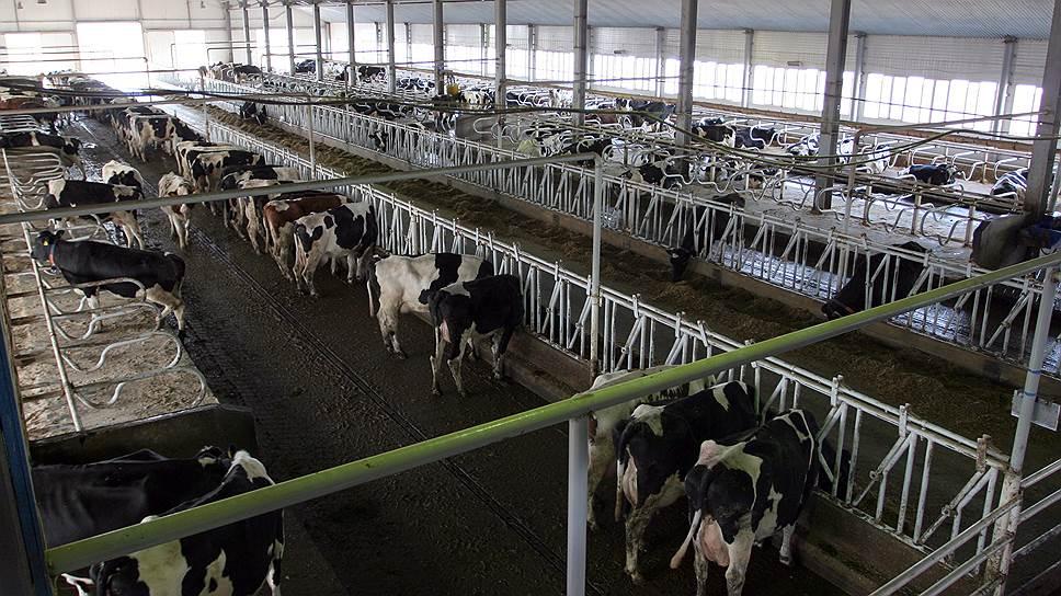Молоко подтянут к норме потребления / На Кубани будет разработана программа поддержки мясомолочной отрасли