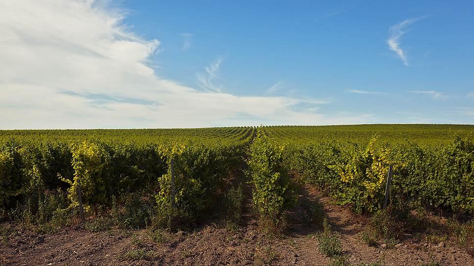 «Абрау-Дюрсо» Бориса Титова может значительно увеличить площадь своих виноградников на Кубани.