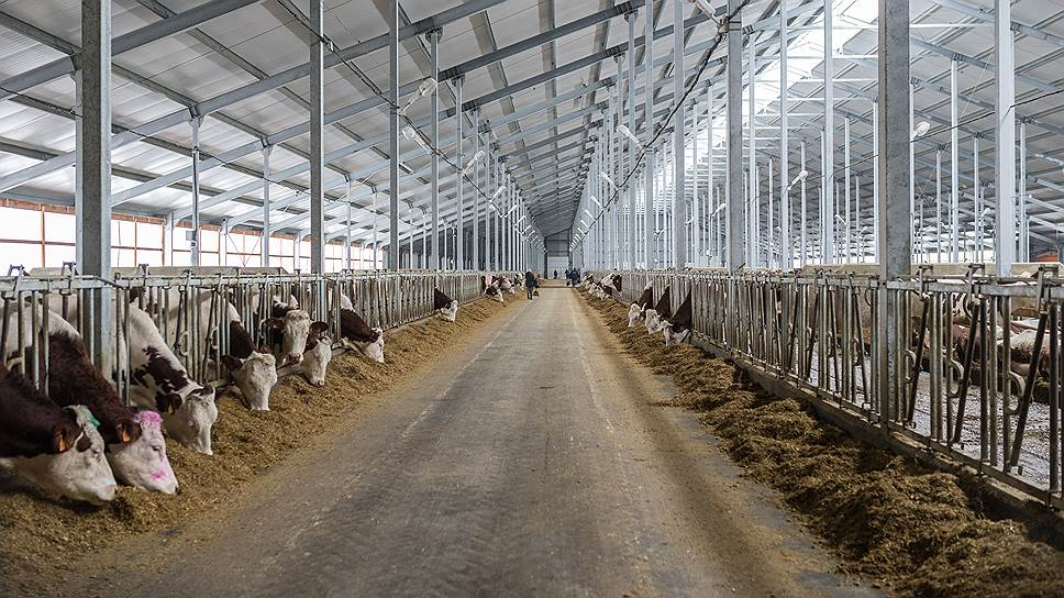 «Агрокомплекс» долил себе молока / В состав агрохолдинга войдет племзавод имени Чапаева