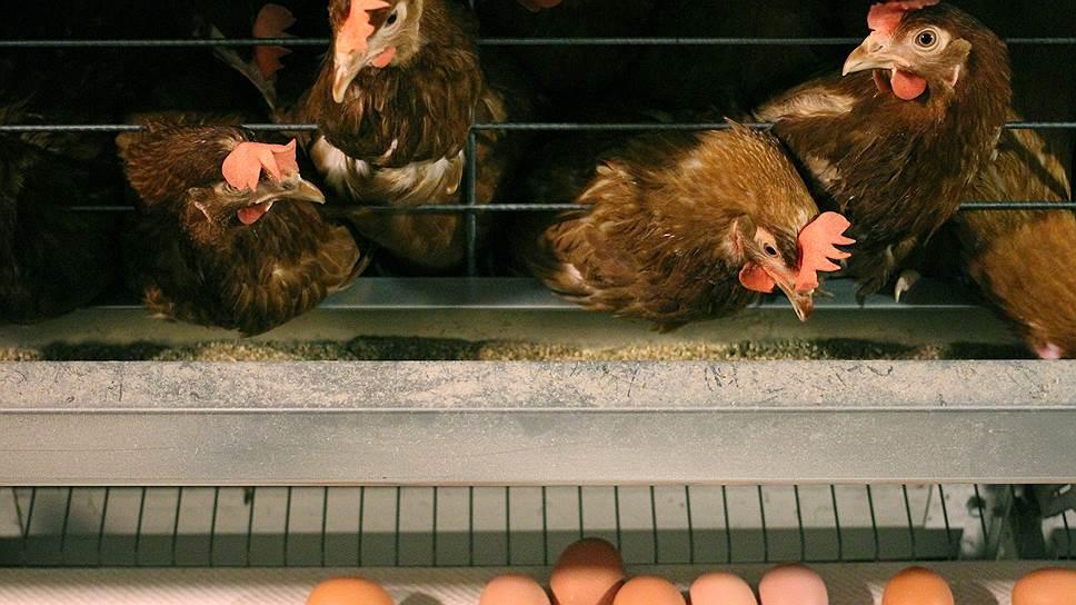 Торги за долги / Акции ПАО «Новомышастовская птицефабрика» выставлены на публичный аукцион за 281,5 млн рублей