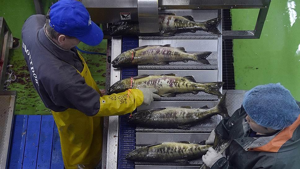 На рыбоперерабатывающие предприятия, как правило, не стоит очередь соискателей вакансий