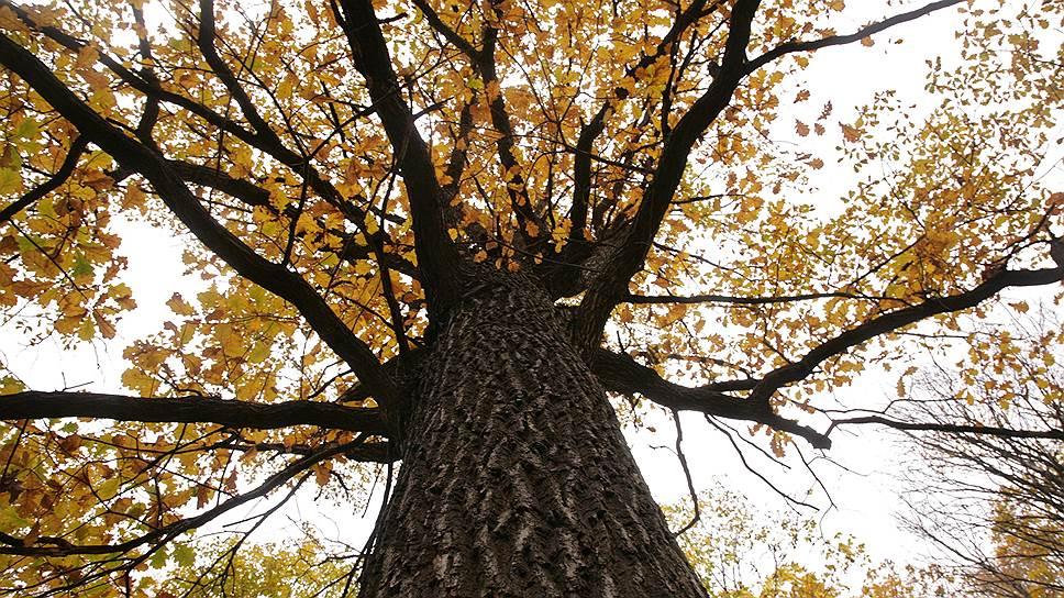 Под угрозой нового вредителя находится 2 млн га лесов на Кубани