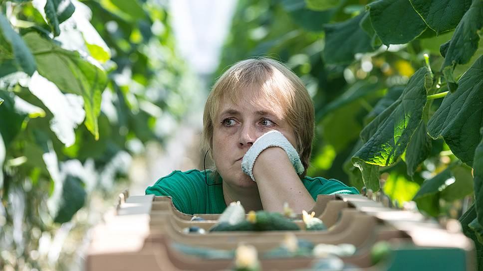 Эксперты говорят о перенасыщении рынка огурцов в России и скором перенасыщении рынка томатов